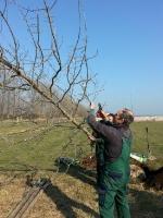 135 Jahre Gartenbauverein - Baum Anpflanzung 2016