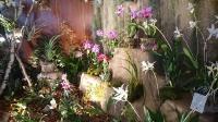 Orchideen 2015