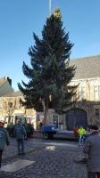Weihnachtsbaum 2016